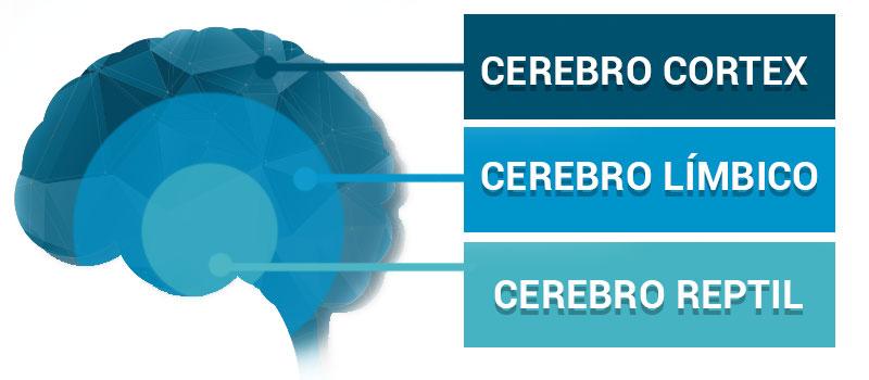 Teoría de los tres cerebros de Paul MacLean